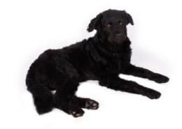 Der econsor Agenturhund Nero