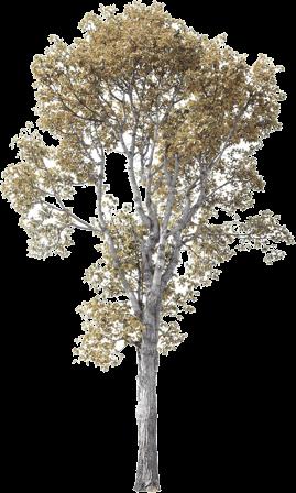 Heller Baum